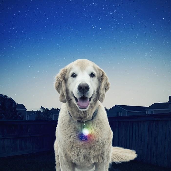 Nite Ize SpotLit™ LED Collar Light - Disco-O Select