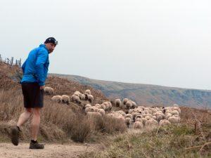 Training for a trail marathon: The shepherding split