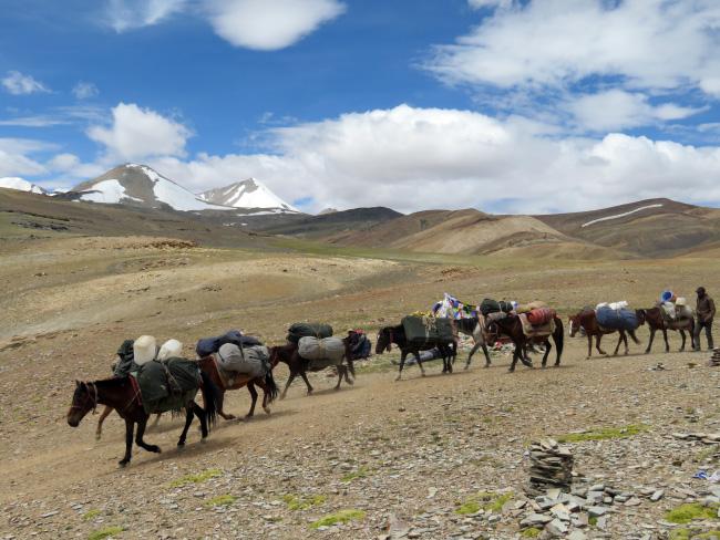 mules crossing the Yalung Naula Pass