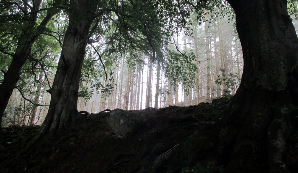Outside Staff Blog | Walking Offa's Dyke in seven days | Atmospheric section through Trevor Hall Wood