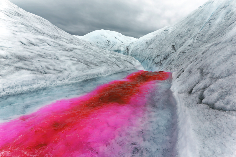 Greenland Expedition - River dye. Photo: Andrew Sole