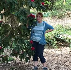 Pennine Way Lockdown - Janet amid rhododendrons Chancet Woods